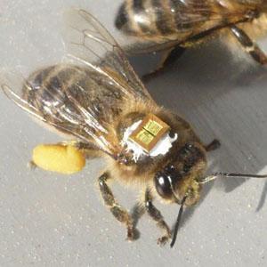ミツバチの画像 p1_20